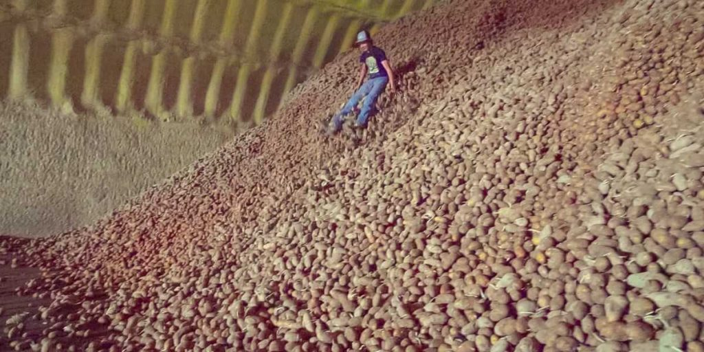 tons of potato being dumped