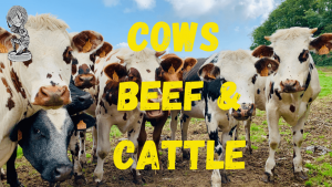 cows-cattle-food-waste-manifesto